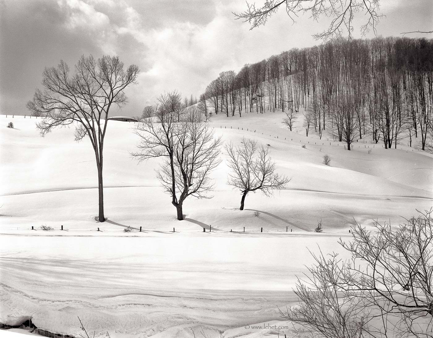 Three Trees, South Strafford Vermont