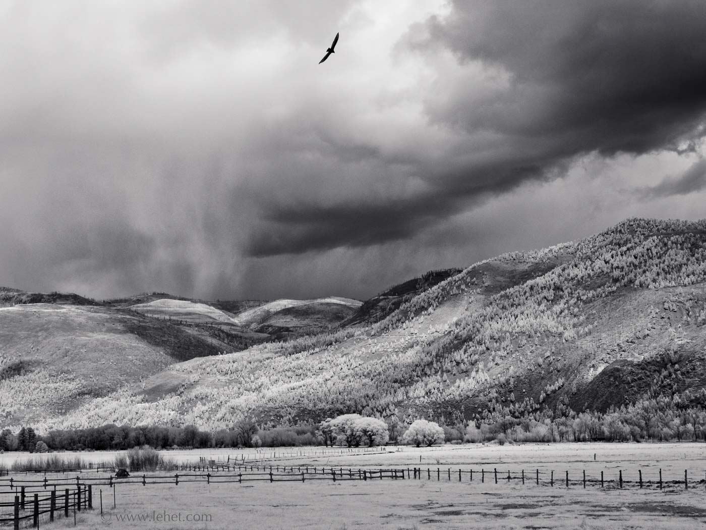 Hawk and Fences, Durango Colorado