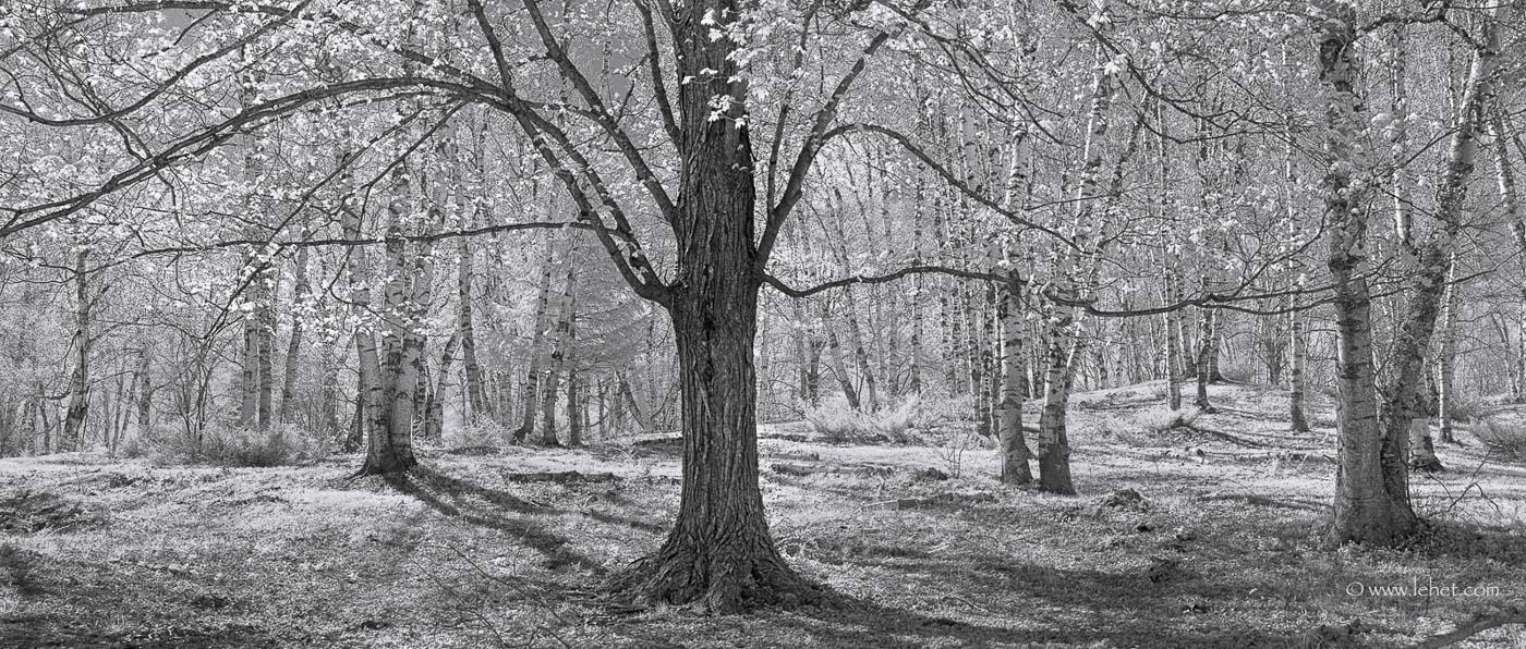 birch grove panorama vermont
