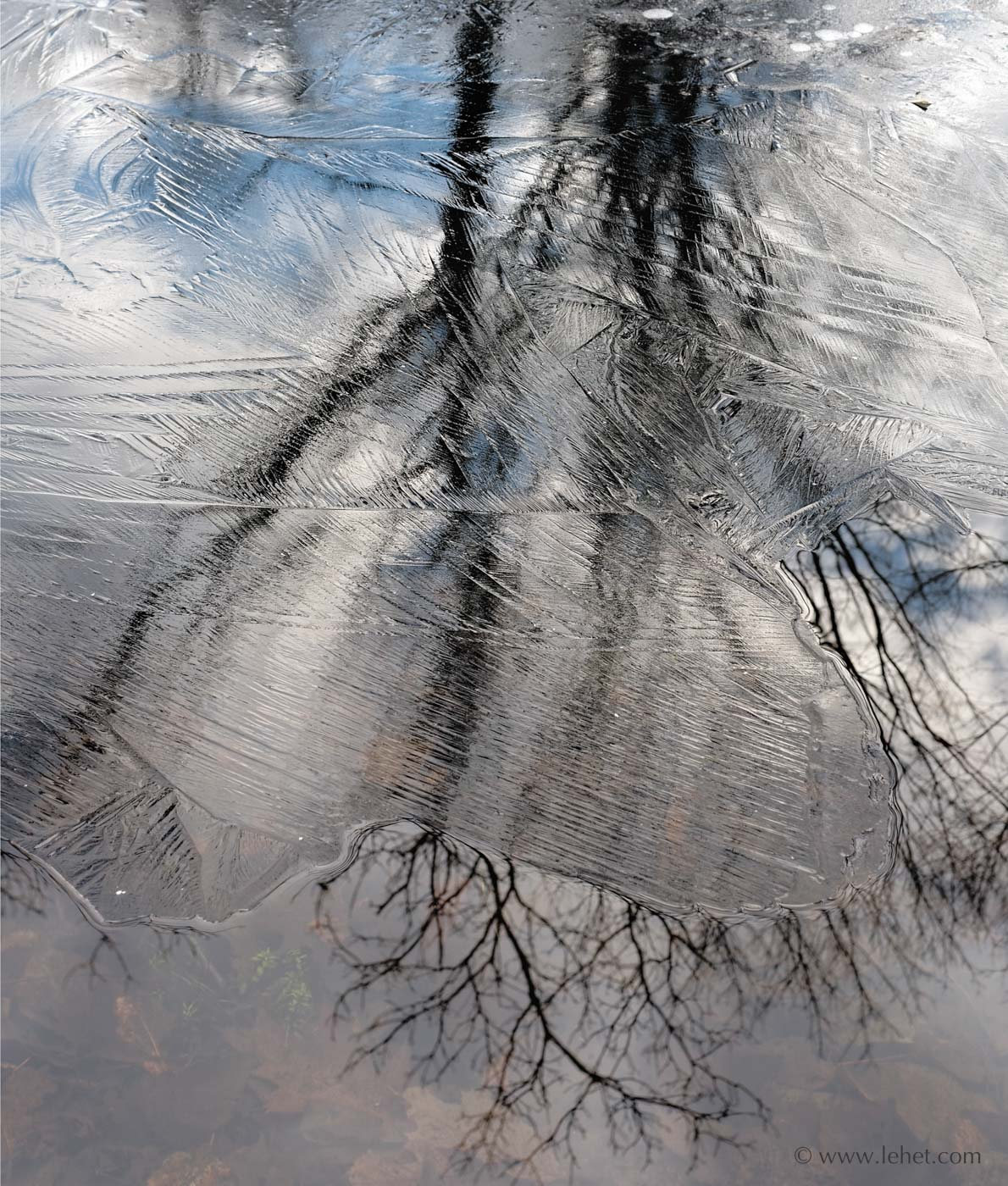 New Ice and Maple Tree Reflection