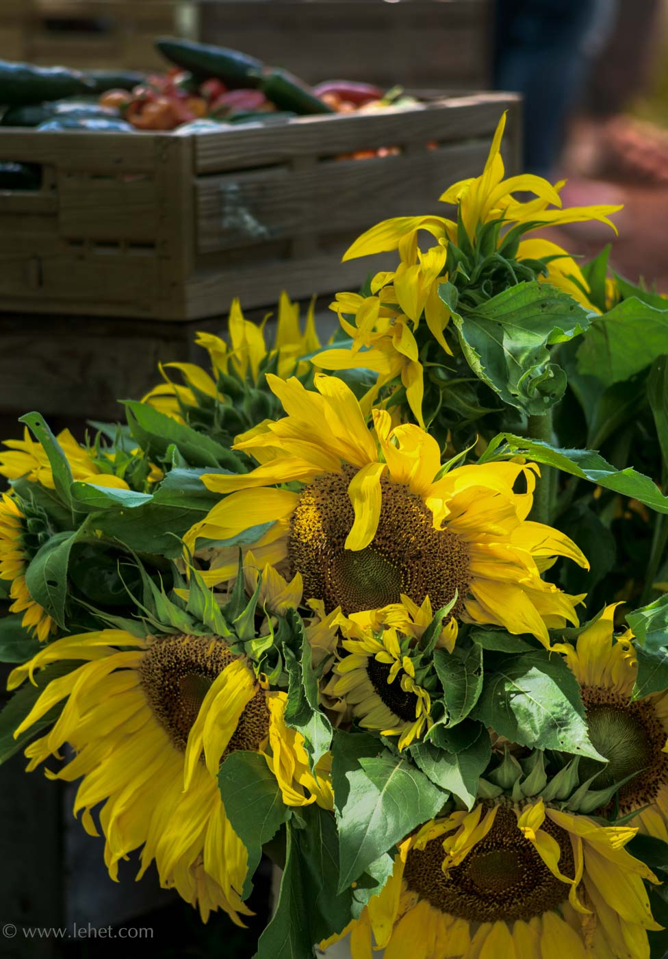 Bucket of Sunflowers at Farmer's Market