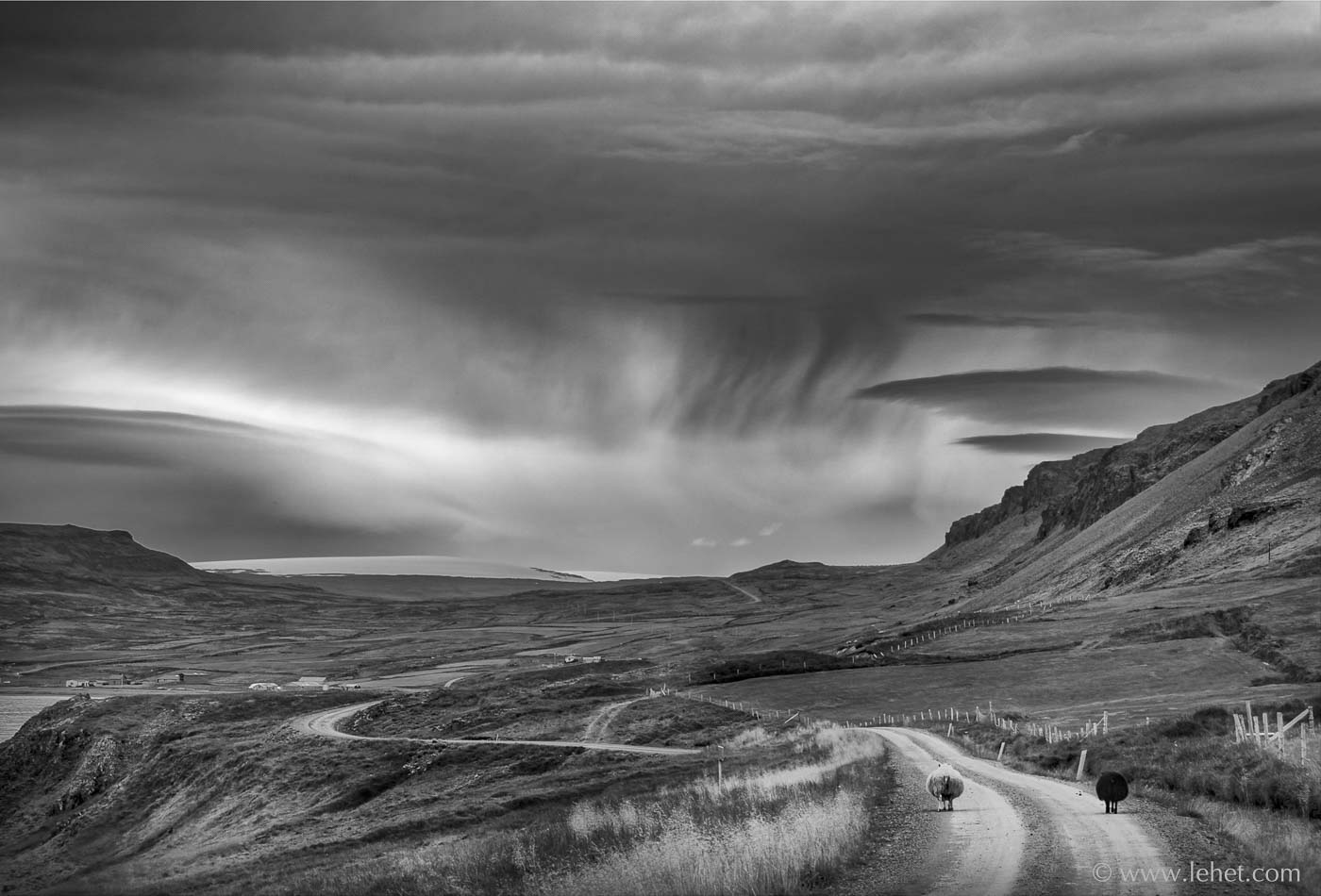 Black Sheep, White Sheep, Curved Road, Iceland