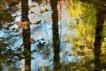Four Water Striders, Autumn, Vermont