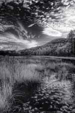 Post Pond, Autumn, Infrared