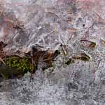Ice and Moss, Meditation Retreat, Vermont 2009