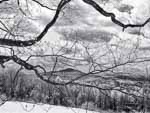 Ascutney Framed by Spring Maple Branches, Hartland VT
