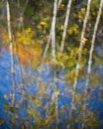 One Maple Leaf, Birch Reflections, Autumn