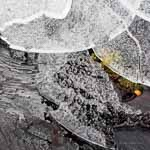 Ice Circles on Tree Stump with Moss