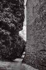 Church Wall, Path, and Yew