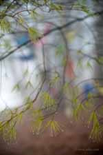 Wet Pine Needles and Prayer Flags in Fog I