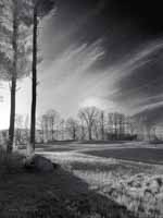 Two Tall PInes, Sun on Meadow, Infrared