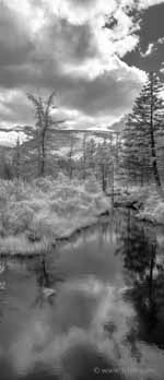 Zealand Pond Infrared Panorama