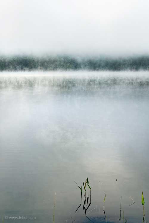 Pickerelweed, Mist Breaking Up, Post Pond