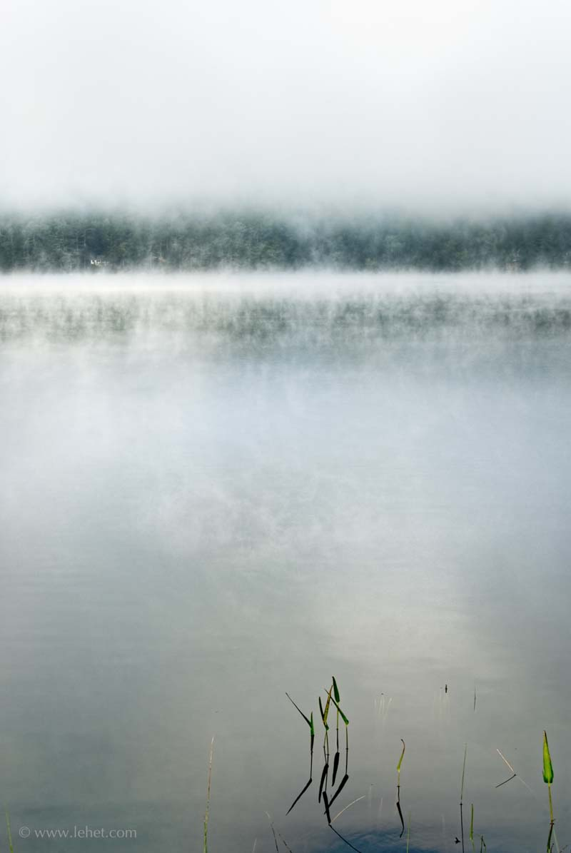 Post Pond Pickerel Weed in Mist