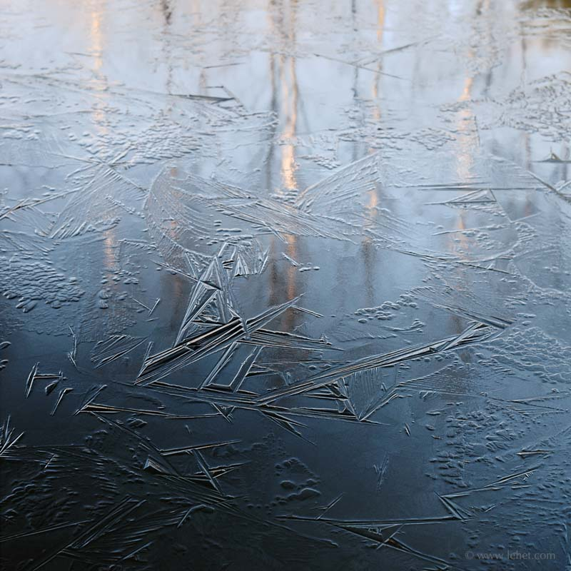 Blue New Ice and Birch Reflections at Dawn