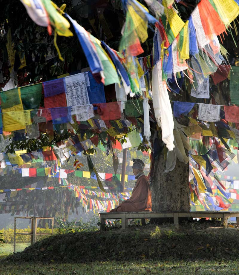 meditator in garden lumbini nepal